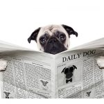 pet facts pet insurance policypal
