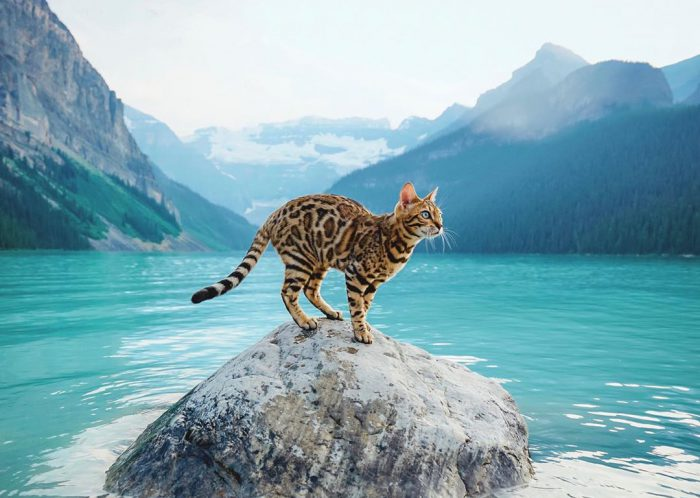 These 5 Lucky Pets Travel the World More Than Us (1 of Them Is a Sailing Chicken)
